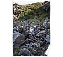 Ptarmigans on Rocks, Go∂afoss, Iceland Poster