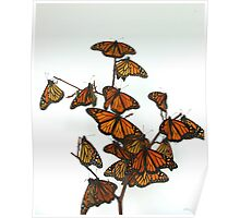 Full Monarch Butterfly Tree Poster