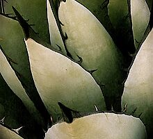 Blue Agave by chrissylong