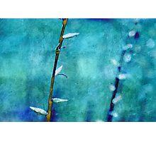 aqua and indigo Photographic Print