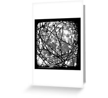The Chocolate Vine Through The Viewfinder (TTV) Greeting Card
