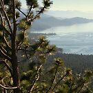 """""""Tahoe Pine"""" by Lynn Bawden"""