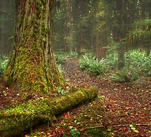 A Forest Of Ancients by van Kampen Photography