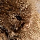 Prickly Portrait by Ron Kube