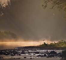 Great Blue Heron, River Mist by Steven David Johnson