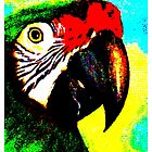 PARROT by OTIS PORRITT