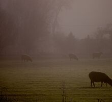 a thick fog breaking, view from the farm by Allan  Erickson