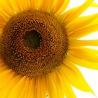 Sunflower Close-up by Tony Ramos