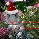 """ Merry Christmas From Hammy "" by Melinda Stewart Page"