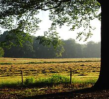 Just some meadows on an early summer morning by jchanders