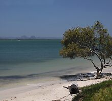 Glasshouse Mountains from Bribie Island by smallan