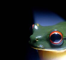 Red Eyed Green Tree Frog by Vanessa Barklay