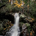 Crater Falls - Cradle Mountain, Tasmania by Bart The Photographer