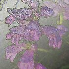 Penstemons with Morning Dew - Silver Haze by Peter Berry