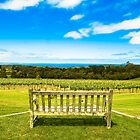 Red Hill Vineyard by Kingston  Liu