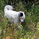 Time to Smell the Flowers by Brian Gaynor