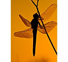Dragonfly in sunset Photographic Print