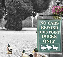 Can Ducks Read ? by Alex Hardie