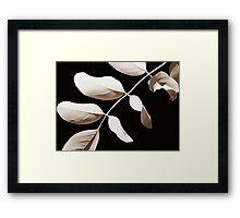 Acacia in Sepia Framed Print