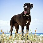 Zephyr the Great Dane by Charlotte Reeves