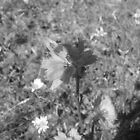 Lonley Flower by Kyle Parkin