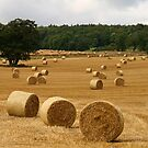 Making Hay by RoystonVasey