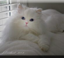 Heavenly Kitty by Julie Everhart