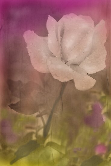 Softly by Barbara Manis