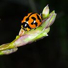 Ladybird at rest by Murray Wills