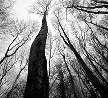Reaching for the sky by Xander Ashwell