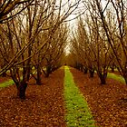 Donnybrook Apple Orchards by Andrew  Semark