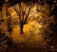 Secret Path by David's Photoshop