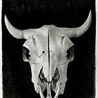 Buffalo Skull by Tony Sturtevant