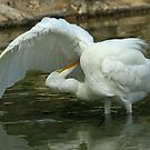 Great Egret by Robert Abraham