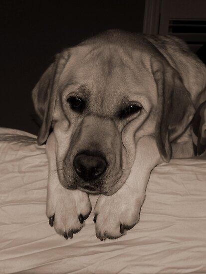 Loney Pup by Katie Clark