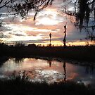 Sunset on Econfina 12-09 by May Lattanzio