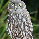 Owl by Jay Spadaro