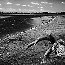 Driftwood on the banks of the Clwyd by Kelvin Hughes