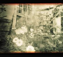 Bellis Perrenis a pinhole study by Kylewis