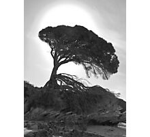 Silhouette on the Beach Photographic Print