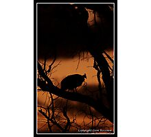 Guinefowl Sunset Photographic Print