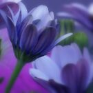 Soft Flowers by ChereeCheree