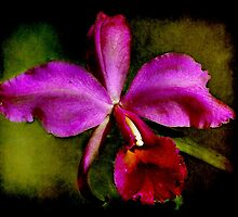 Orchid - Laelia Cattleya Canhaniana by © Kira Bodensted