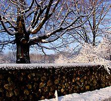 Winter time by Tricia Stucenski