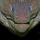 Giant Moray by lilithlita