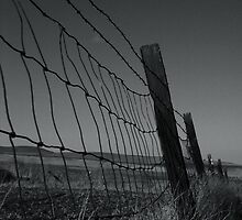 Wire Fence by Tim Freeman