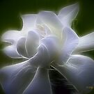 The Gardenia by Pat Moore