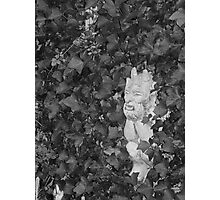 Dad's Garden Gargoyle Photographic Print