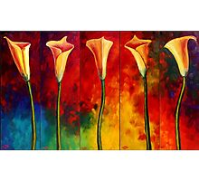 Calla Lilies Glow Photographic Print