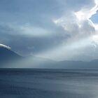 lago rays by Shauna Stannard